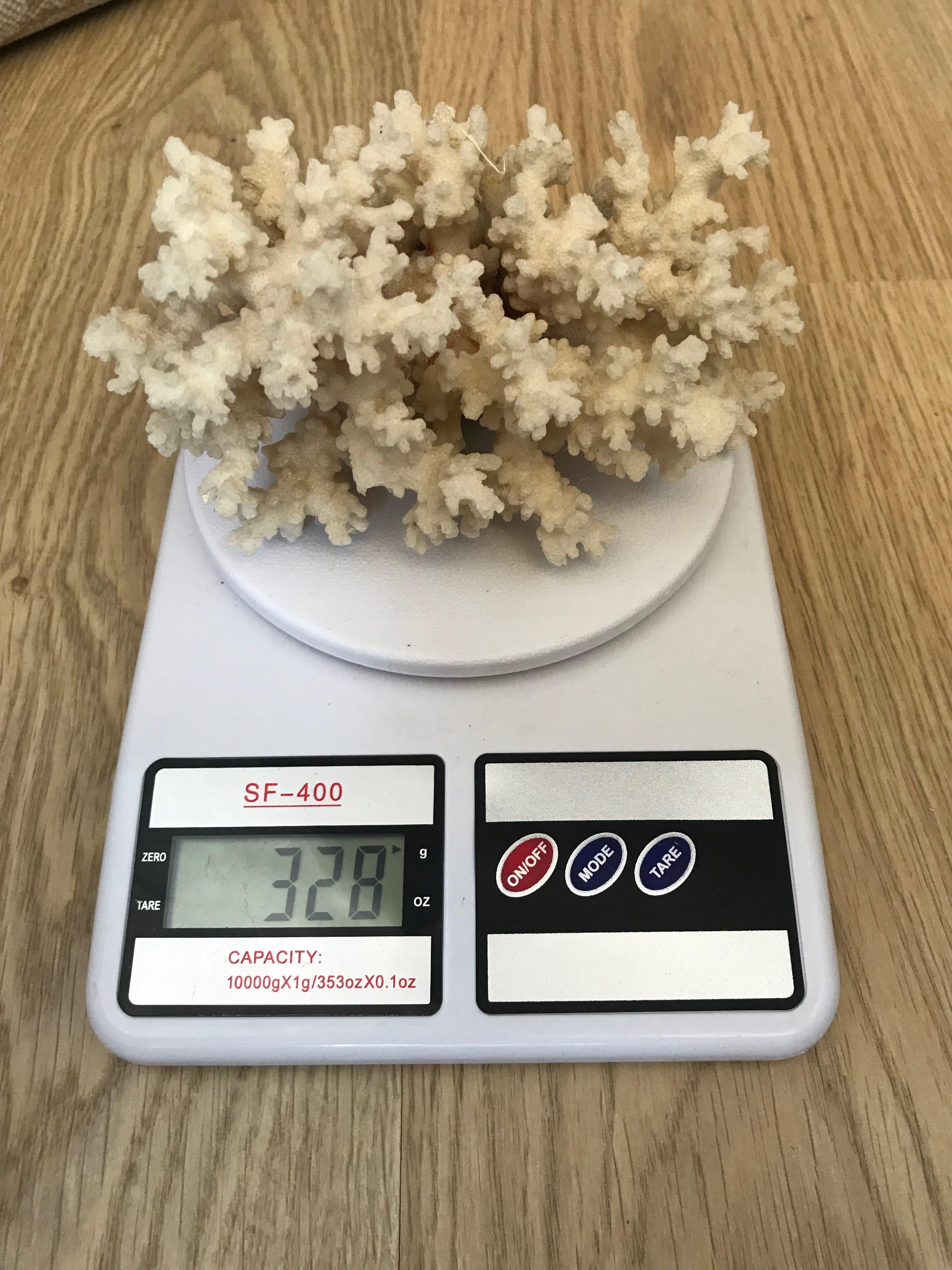 вес корала