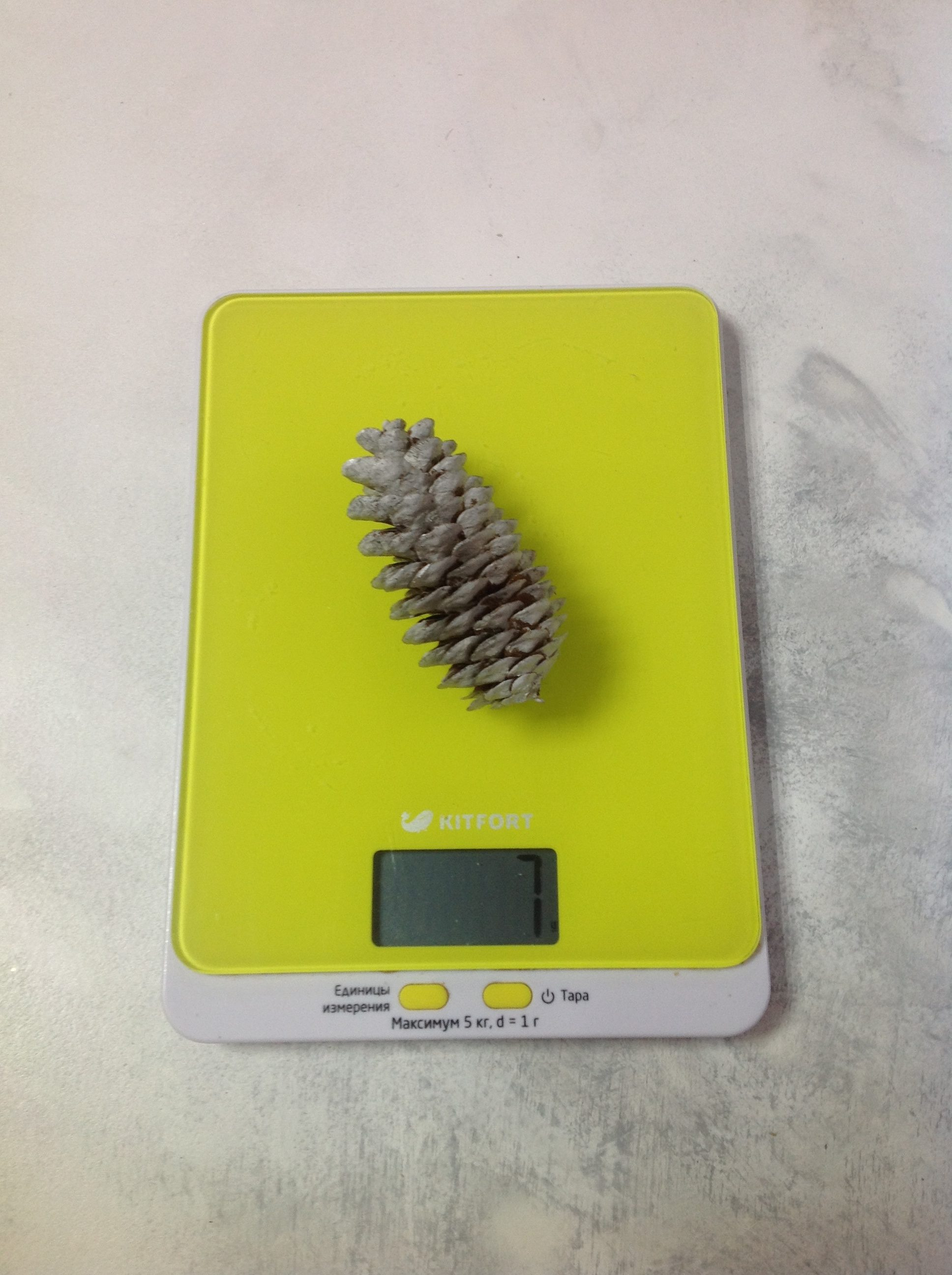 вес еловой шишки средней
