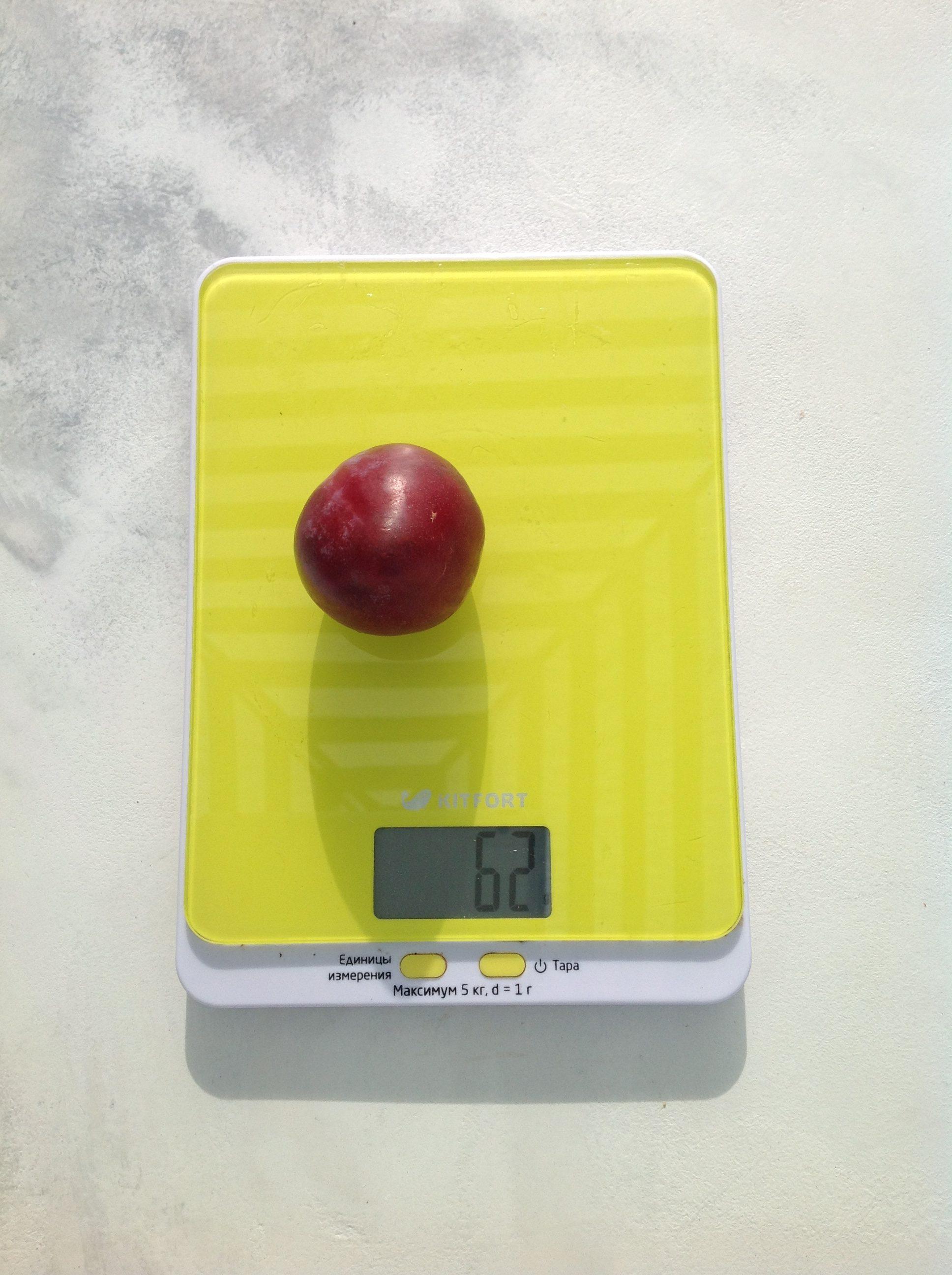 вес сливы медовой
