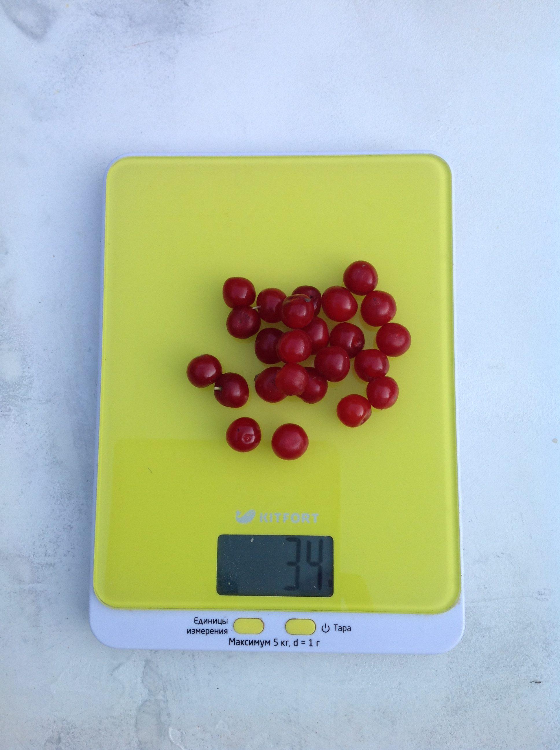 вес горсти вишни войлочной