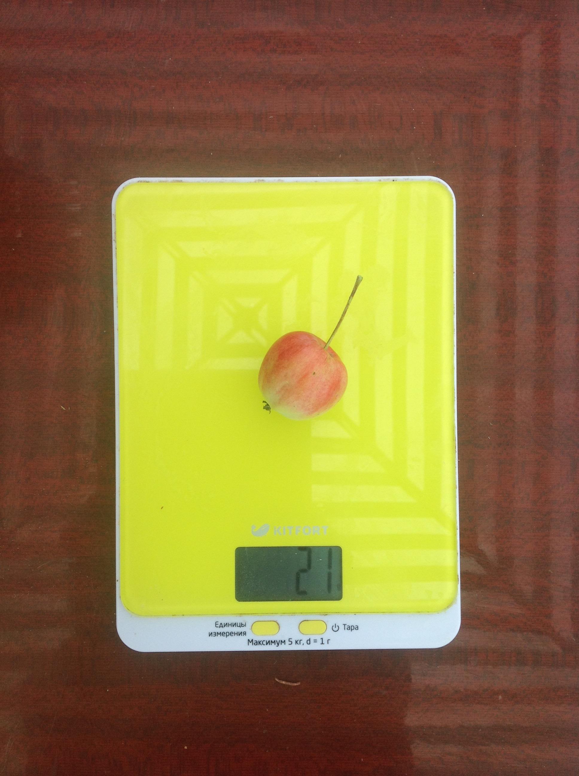 вес маленького садового яблока
