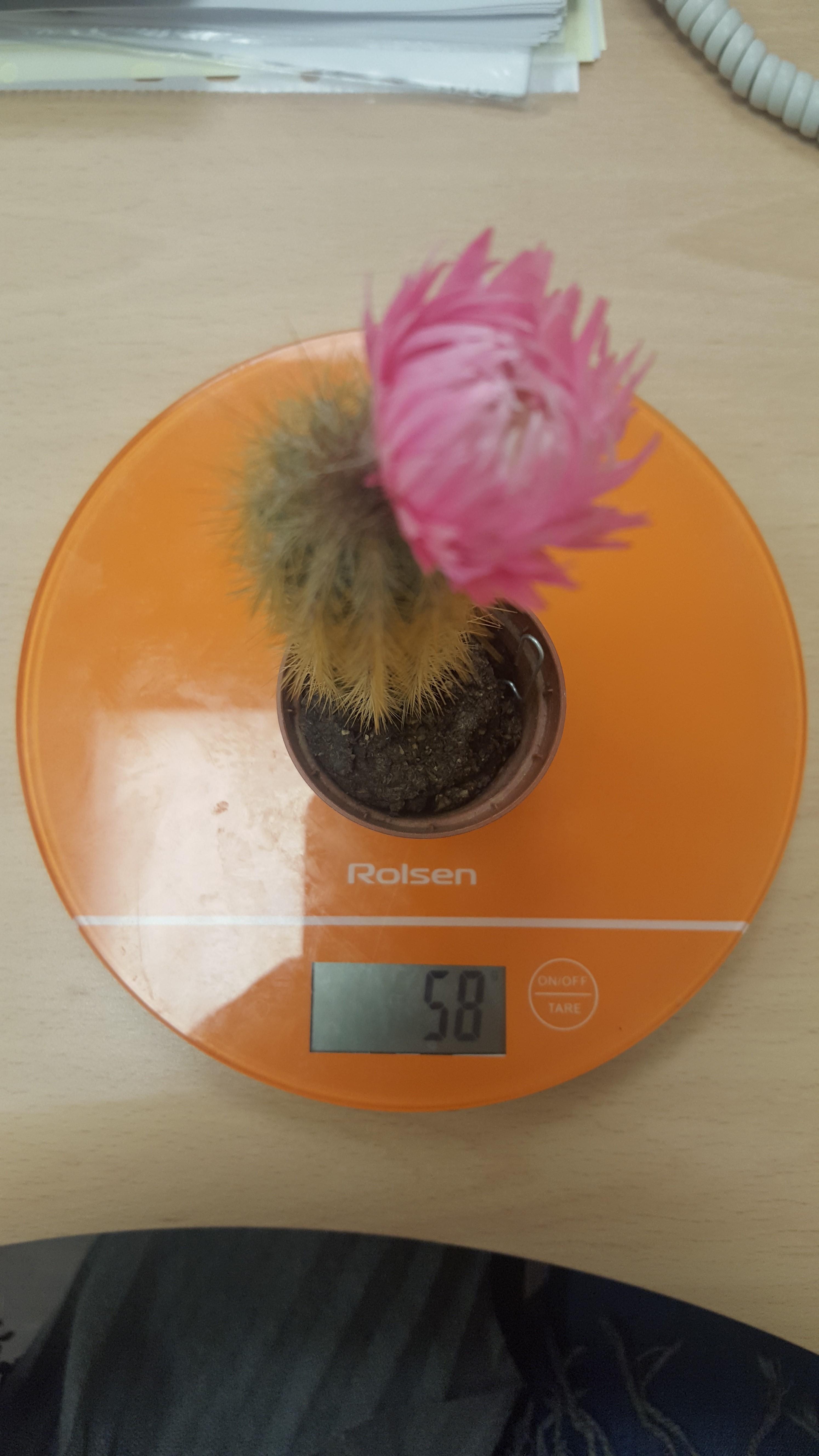 вес кактуса искусственного
